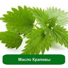 Масло Крапивы (инфуз), 1 литр