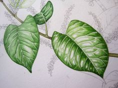 Lizzie Harper watercolour step 4 in painting a leaf