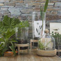 die besten 25 terarium pflanzen ideen auf pinterest sukkulentenarten cola zero ungesund und. Black Bedroom Furniture Sets. Home Design Ideas