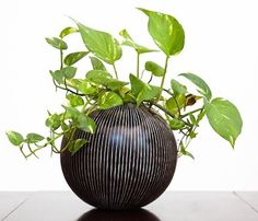 Golden Pothos process general air toxins well and are very easy to grow. Like crazy easy to keep alive. If you don't have a green thumb, start with this plant to ensure success.