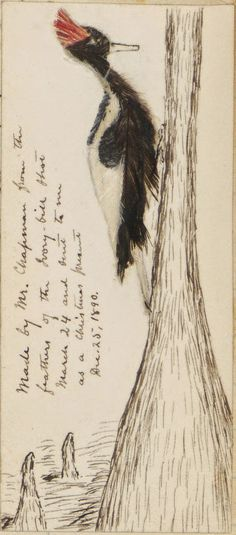 Biodiversity Heritage Library: Transcribing the Field Notes of William Brewster