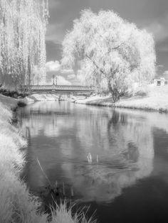 By the river Cibin, Sibiu, Romania Sibiu Romania, Bridge, Trees, River, Rivers, Wood, Shrub, Loft, Bro