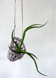 Living Necklace by Paula Hayes: Each necklace is unique and available colors include natural, lavender and black. Air plant included.#Necklace #Paula_Hayes #Plant