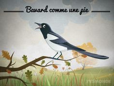 Bavard comme une pie Literal translation: As talkative as a MAGPIE Meaning: To be very talkative/to be a chatterbox French Expressions, French Words, French Quotes, French Teacher, Teaching French, How To Speak French, Learn French, Expression Imagée, Idiomatic Expressions