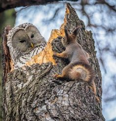 Owl on tree with squirrel, adorable animals, animal lover, wild photo, life of wild animals Nature Animals, Animals And Pets, Funny Animals, Cute Animals, Crazy Animals, Wildlife Nature, Happy Animals, Beautiful Birds, Animals Beautiful
