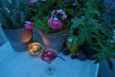 photo: Άννα Γαλανού Plants, Plant, Planets