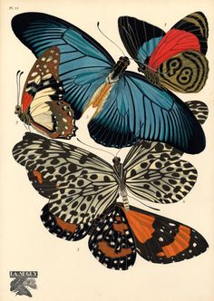Eugène Séguy (1890 – 1985) was a French entomologist who published many portfolios of illustrations and designs from the turn of the century to the 1930s w