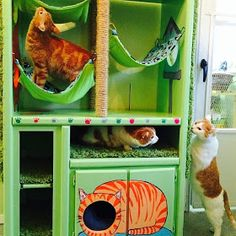 DIY Cat Hotel: Part 3   The finished project with happy cats!   Transforming a sturdy boring ordinary brown bookshelf into this fun, functional, whimsical cat hotel, DIY cat playhouse, DIY cat condo