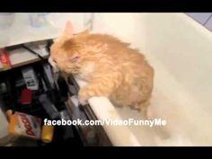 Fat cat can't escape bath tub