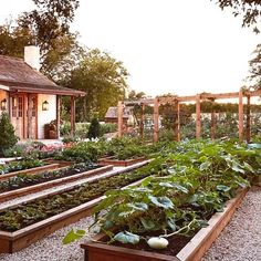 Another lovely example of raised bed gardening. It truly is amazing just how many veggies herbs and flowers can be grown by this method. The maintenance is easier and the harvest never disappointing. Why not give it a try this Spring 💚🥕 Raised Garden Beds, Raised Beds, Container Vegetables, Veggies, Annual Flowers, Growing Herbs, Edible Garden, Vegetable Garden, Yard