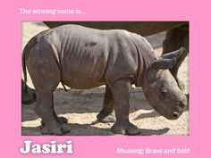 And the Baby's Rhino's Name is.... @Maggie Mayet Isn't she so cuuuuttee???