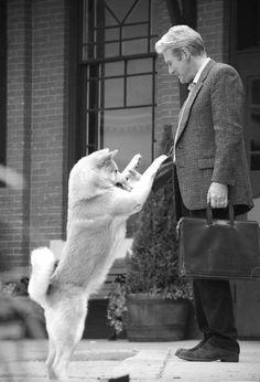 hachiko: a dog's story   Tumblr
