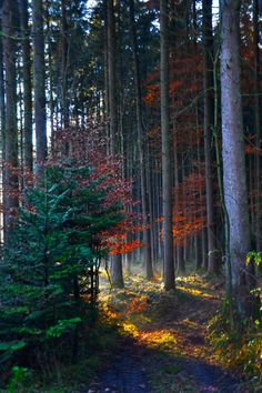 💙 Dark Colored Woods on by Kristof Zerbe, Wiesbaden, Germany All Nature, Amazing Nature, Landscape Photography, Nature Photography, Mountain Waterfall, Red Sunset, Forest Landscape, Tree Forest, Tree Leaves