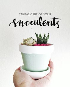 How DO you take care of succulents, anyway? Read on for tips on how to keep those succulents happy and alive at Hey Love Designs.