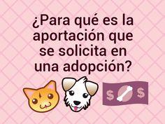 ¿Para qué es la aportación que solicitan en la adopción? | Adopta.mx