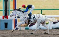 連勝を飾るブチコ=京都競馬場(撮影・石湯恒介) Race Horses, Horse Racing, Horse Photography, Thoroughbred, Ponies, Bunt, Equestrian, Marble, Number