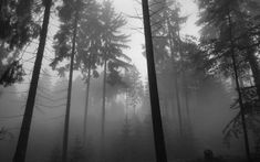 Forest fog wallpaper hd customity.