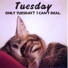 Find very good Jokes, Memes and Quotes on our site. Keep calm and have fun. Funny Pictures, Videos, Jokes & new flash games every day. Its Only Tuesday Meme, Tuesday Humor, Cat Quotes, Animal Quotes, Bon Mardi, Weekday Quotes, Its Friday Quotes, Funny Thoughts, Good Jokes