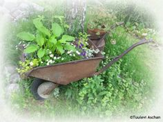Great re-use for the old wheelbarrow