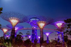 Trip to the Island country of South East Asia, Singapore - Travelmax