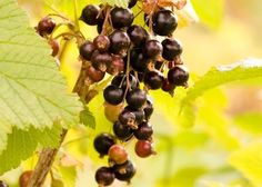 1000+ images about | cAsSis/CuRraNt | | on Pinterest ...