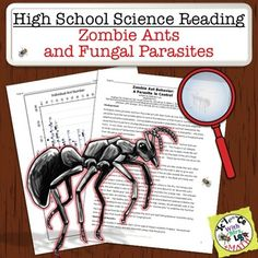 High School Science Reading and Sub Plan: Zombie Ants and Fungal Parasites. Students read a reading, analyze a challenging graph, and answer questions, all while learning about correlation and causation! Science and Math with Mrs. High School Reading, High School Science, Student Reading, Biology Lessons, Science Lessons, Deep Thinking, School Levels, Reading Passages, Close Reading