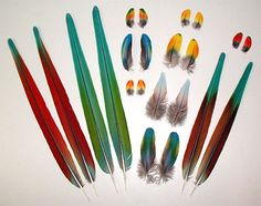 Feather Shop - Macaw