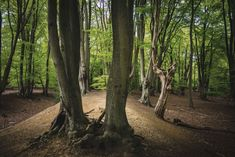 "Excerpted from Robert Macfarlane's recently published book, ""Underland,"" ""Understory"" is an examination of the life beneath the forest floor. Epping Forest, Forest Floor, World Images, Douglas Fir, Natural Wonders, Ecology, Woodland, Country Roads, Island"