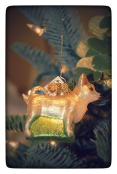 What does the fox say? This one happily (and quietly) dangles in your tree!