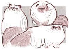 Himalayan Sketches daily cat drawings