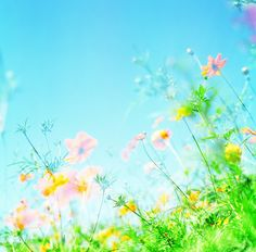 Summer meadow filled with flowers