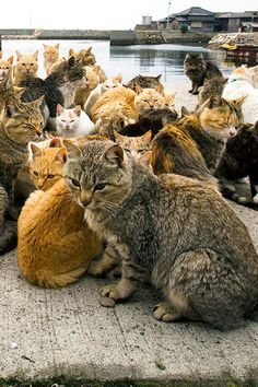 "Fanatic About Felines? Why Not Visit ""Cat Island"" In Japan"