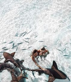 Swimming with sharks is at the top of our bucket list! What do you want to do with a bestie? Find some inspiration on our Beach Day board! @ShopPriceless