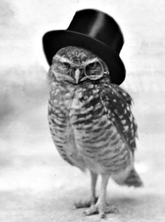 Top hats on owls are never wrong, particularly when coupled with an eye piece. This is an owl with class. Do I look like that pug pic she likes?!