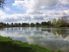 Slovakia, nature, pond