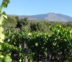Our own Alex Down get's very excited discovering a new wine region: Mount Etna!