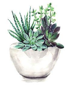 Succulents by Bridget Davidson