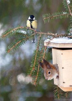 Cute bird & Squirrel