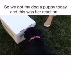 Best Unboxing Ever! ❤️dogs doglovers puppy puppies cute funny cutedogs funnydogs animals animallovers lovelyanimalsworld is part of Dogs - Funny Animal Videos, Funny Animal Pictures, Cute Funny Animals, Animal Memes, Cute Baby Animals, Funny Dogs, Animals And Pets, Dog Videos, Videos Funny