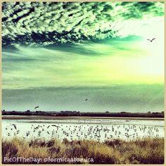 """La #PicOfTheDay #turismoer di oggi ci porta a volare con i gabbiani sulla #Salina di #Cervia """"Sprazzi di luce"""" Complimenti e grazie a @formicaatomica"""