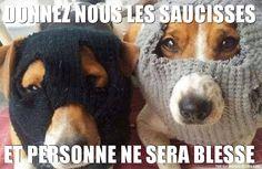 Chiens masqués