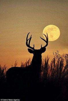 Moon over a silhouette of a deer looking on!