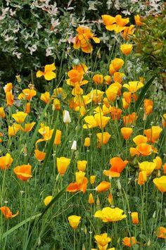 Mon jardin en juin 2013