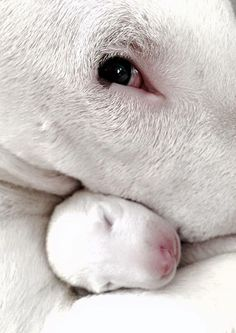 Bull Terrier mom and child