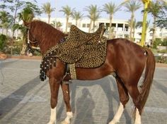 I like leopard print, but this left me speechless. I usually don't pick on native costumes on this site as I don't classify that at Tacky Ta. Rare Horse Breeds, Rare Horses, Horse Costumes, Saddles, Horse Tack, Horse Riding, Egyptian, Day, Arabian Horses