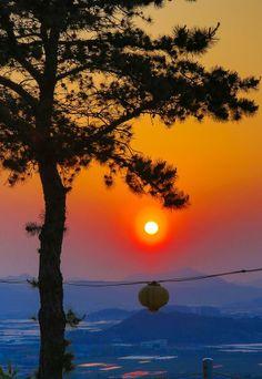 lotus lanterns sunset