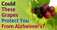 Resveratrol is an antioxidant found in a number of plants and is known to have a number of beneficial health effects. http://articles.mercola.com/sites/articles/archive/2015/09/28/resveratrol-alzheimers-disease.aspx