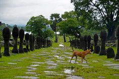 See related links to what you are looking for. Pakse, Hanoi, Cambodia, Html, Places, Temple, Ruins, Thailand, Cities
