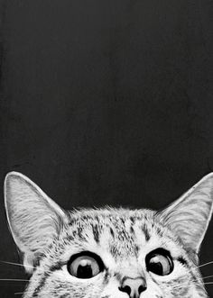 You Asleep Yet by Laura Graves - - art - Katzen I Love Cats, Crazy Cats, Cute Cats, Animals And Pets, Cute Animals, Sneaky Cat, Gato Anime, Anime Cat, Photo Chat