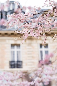 Paris Photograph   Cherry Blossoms in Paris by GeorgiannaLane